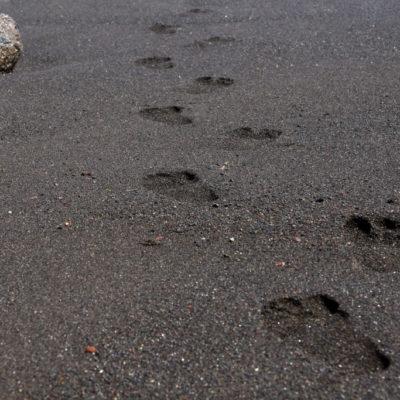 Spuren im schwarzen Sand - dunklem Lavasand auf Teneriffa