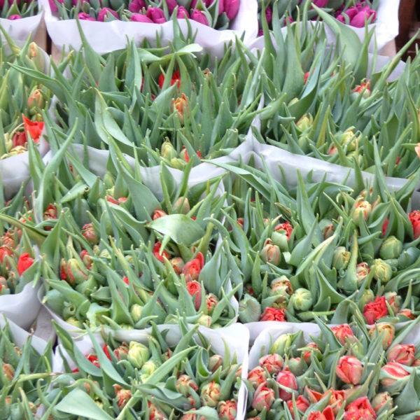 Tulpen auf dem Bloemenmarkt