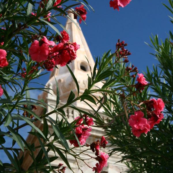 Oleander vor der  Chiesa di san Giuseppe