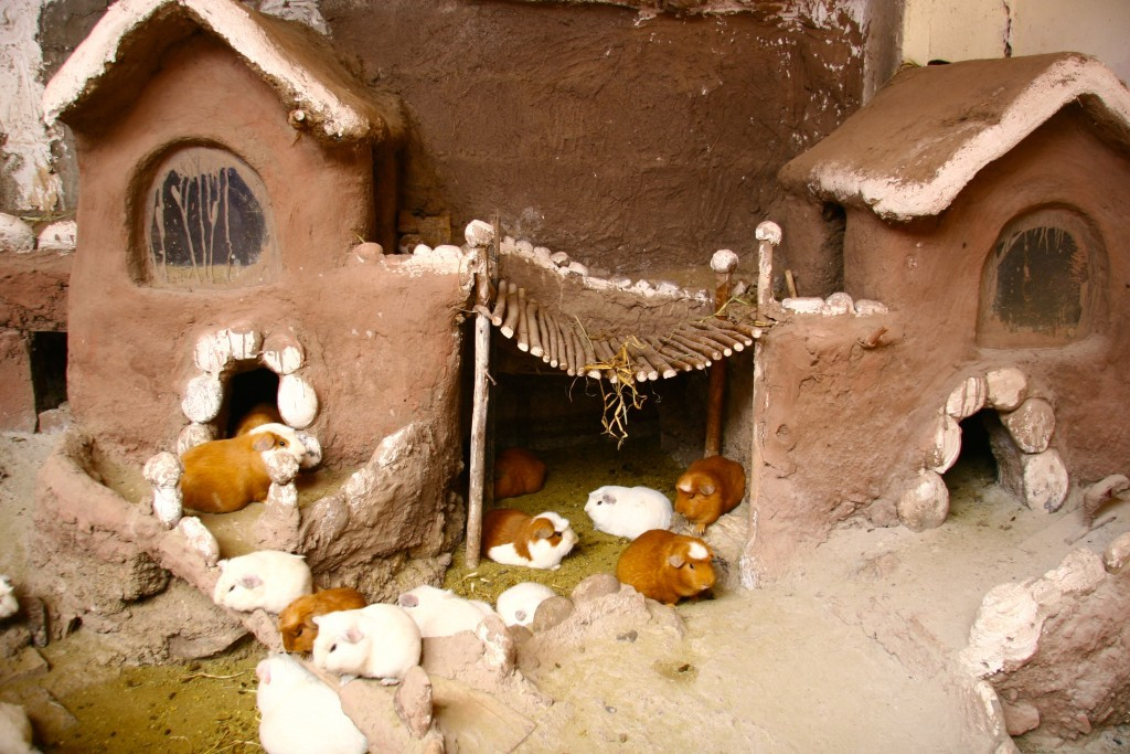 Cuy-Stall in der peruanischen Küche - Diese Meerschweinchen sind für den Kochtopf bestimmt