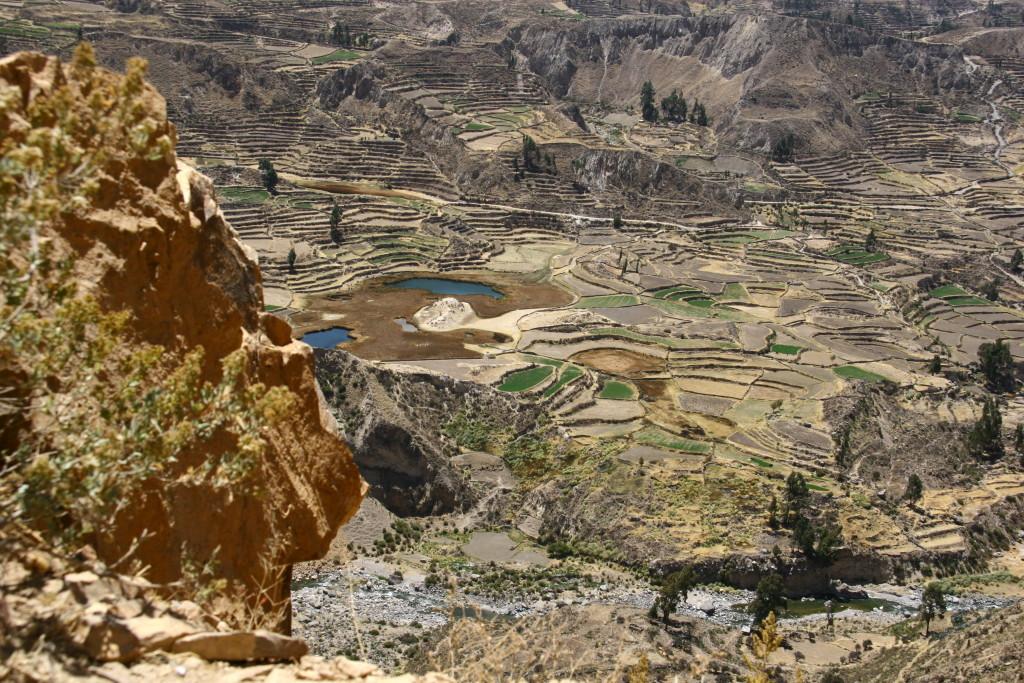 Inka-Terrassen im Valle del Colca