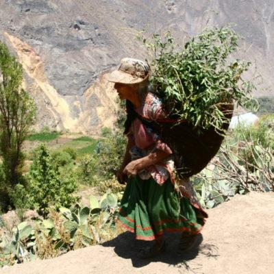 Cañon del Colca - Alte Frau trägt Heu in einem Tuch auf dem Rücken für ihre Tiere