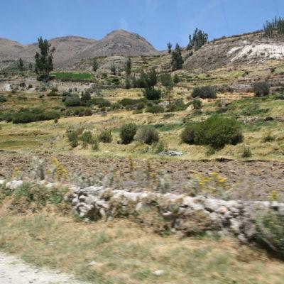 Cañon del Colca - Felder in der Nähe von Cabanaconde