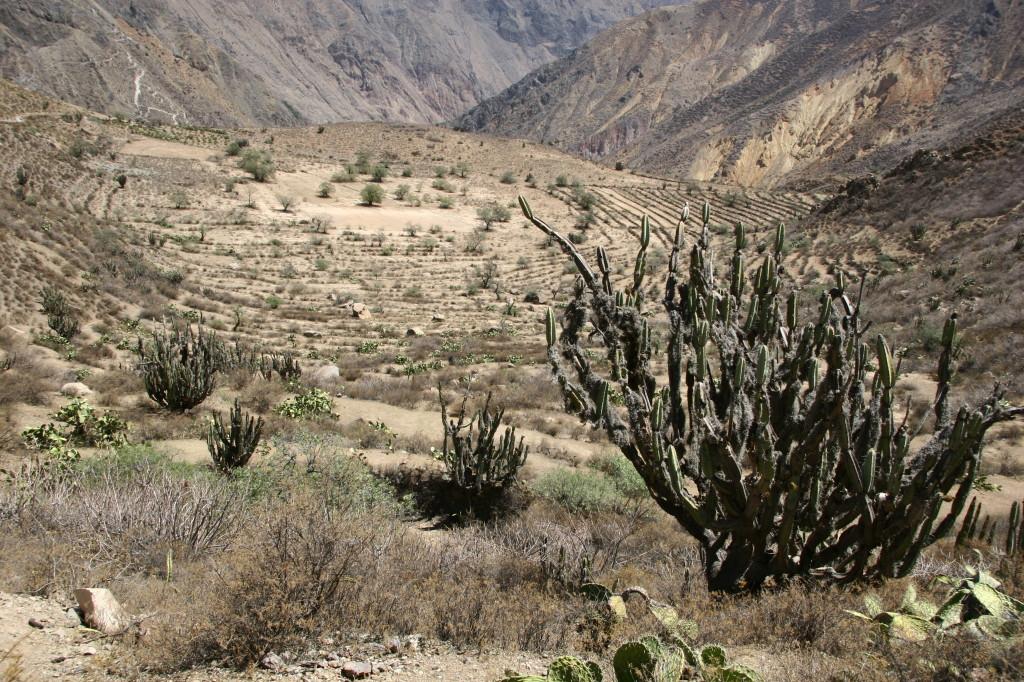 Colca-Tal -  Landbau-Terrassen aus der Prä-Inka Zeit