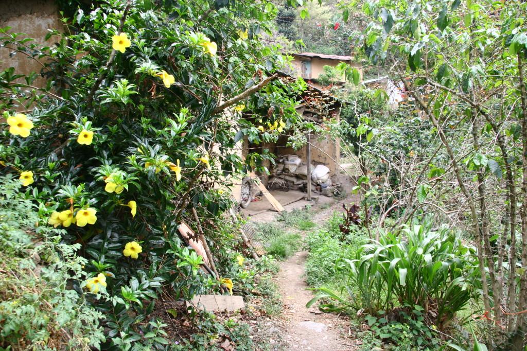 Durch den Dschungel zum Machu Picchu