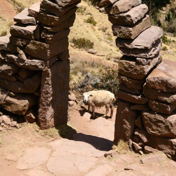 Ein Schaf steht im Bogen der Freundschaft
