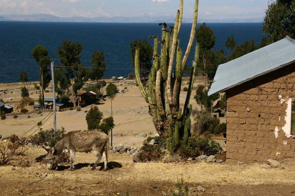 Esel vor der Hütte - Auf der Insel Amantaní gibt es keine Straße und keine Autos