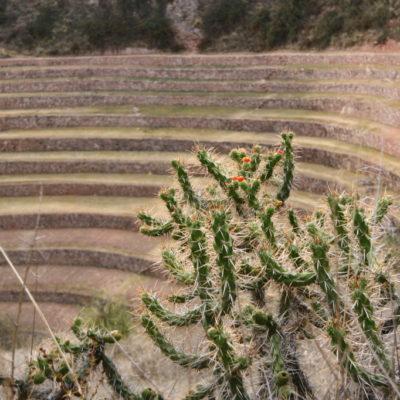 Moray - Die Inka-Anlage Moray ist eine Anlage, bestehend aus mehreren Terrassen in verschiedenen Höhen