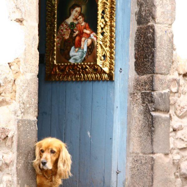 Neugieriger Spaniel im Eingang zum Antiquitätenladen