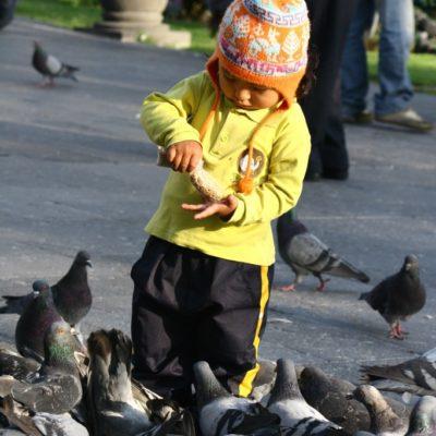 Niño füttert Tauben auf der Plaza de Armas in Arequipa