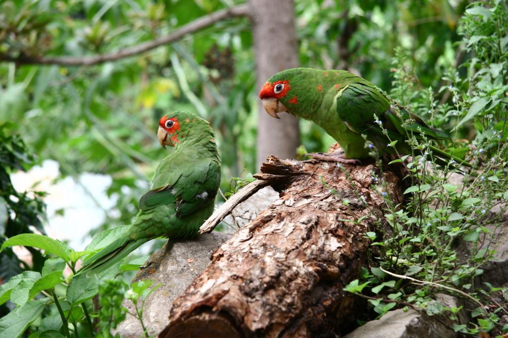 Papageien auf dem Inca Trail