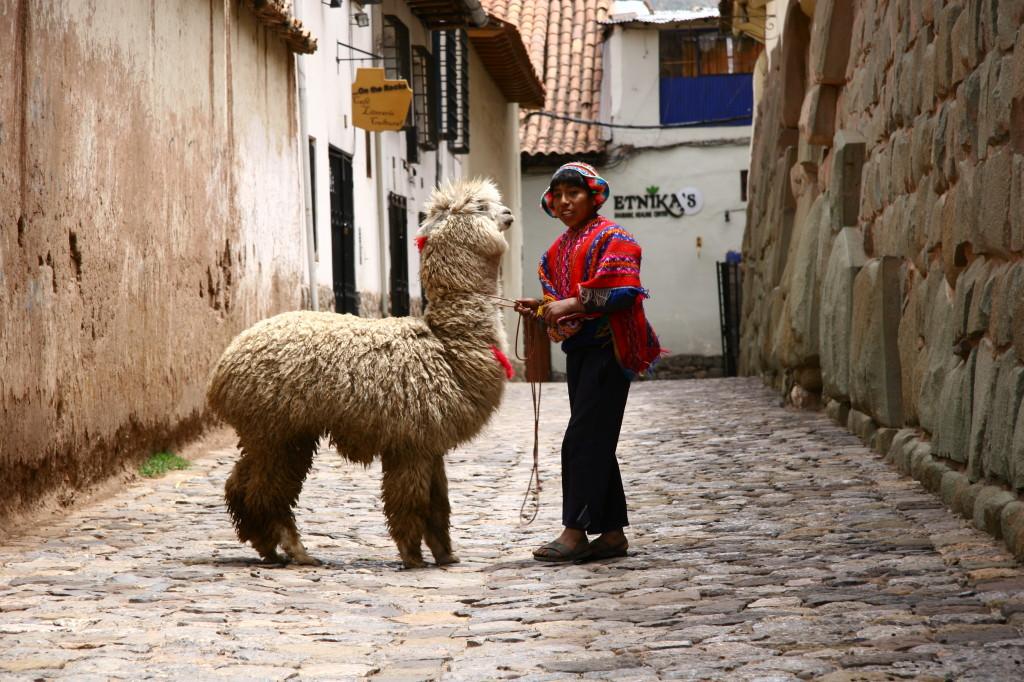 Peruanischer Junge mit Alpaka an der  Inkamauer in der Calle Hatunrumiyoc / Cusco