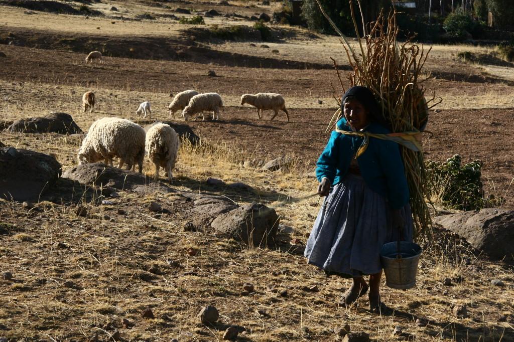 Quechua-Frau mit Bündel auf dem Rücken hütet Schafe