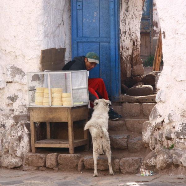 Quesos Maduros - Käse-Verkäufer füttert einen Hund