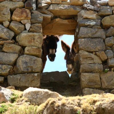 Ruinas de la Isla del Sol- Esel schauen durch SteinfensterEsel schauen durch Steinfenster