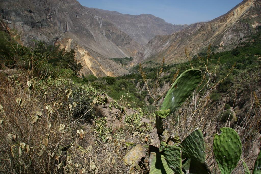 Valle del Colca - Der Cañón del Colca ist mit 3.269 m Tiefe der zweittiefste Canyon der Wellt
