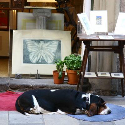 Beagle vor einem Antiqitäten-Laden im Barri Gòtic