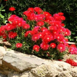 Blumen im Park Güell