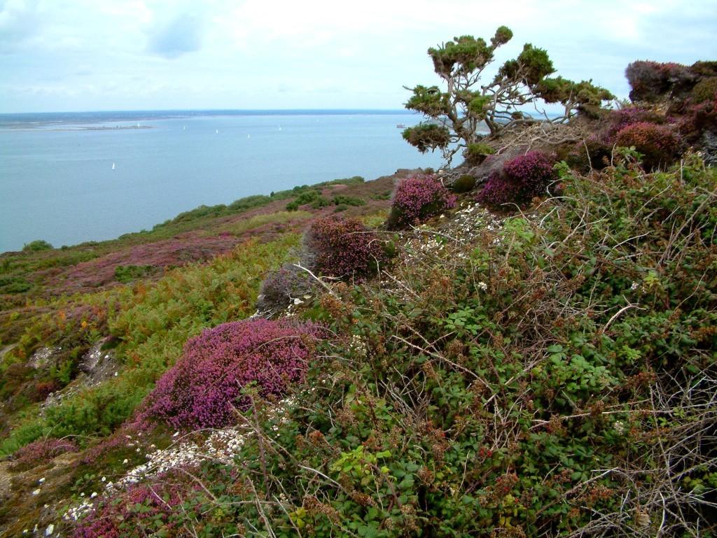 Headon Warren auf der Insel Isle of Wight