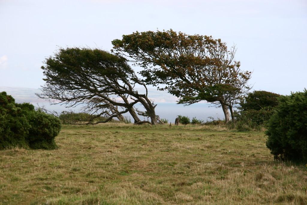 Windflüchter auf der Isle of Wight