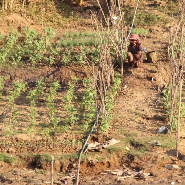 Gemüseanbau am Mekong