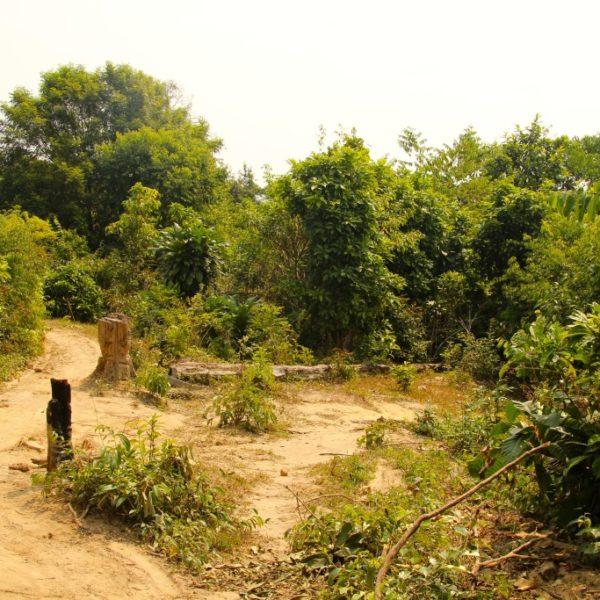 Pfad durch den Dschungel von Koh Rong