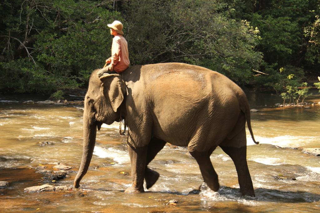 Elefantenbad im Fluss