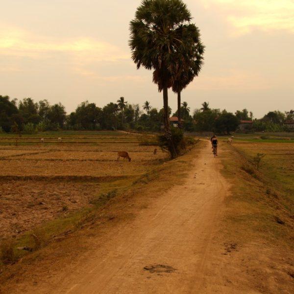 Feldweg auf Koh Trong Island