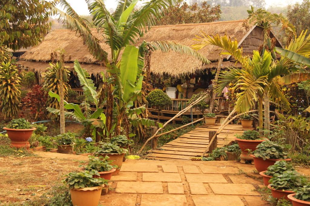 Kaffee-Plantage in Mondulkiri - Frischer Kaffee mit feiner Schokonote direkt vom Hersteller... und fantastische Cambodian Banh Chao