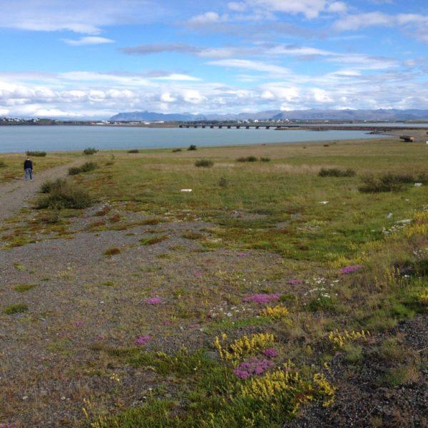 Die Brücke von Borgarfjörður