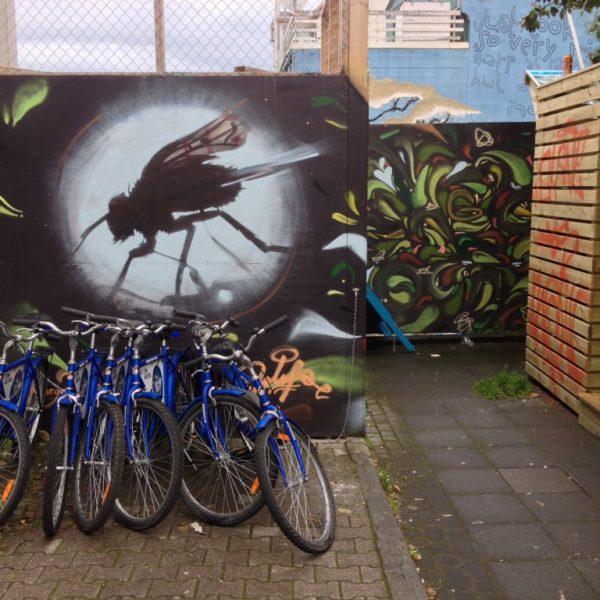 Die Fliege - Streetart in Reykjavík