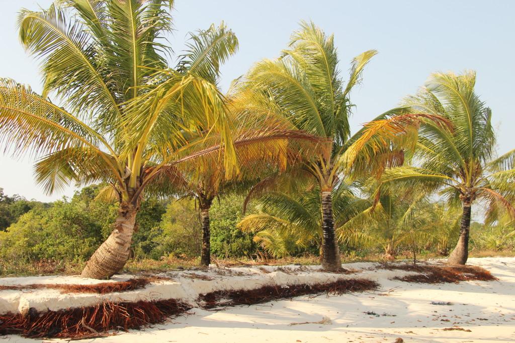 Bounty-Feeling mit Kokosnusspalmen