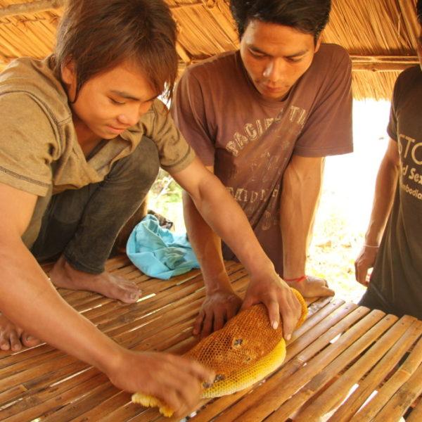 Bunong-Dorf - Junge Khmer haben eine Honigwabe gefunden