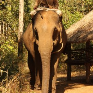 Elefantenreiter