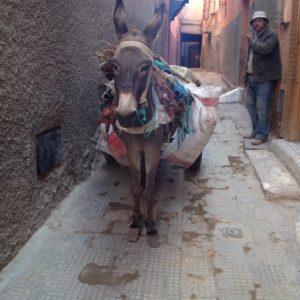 Esel in den Gassen von Medina