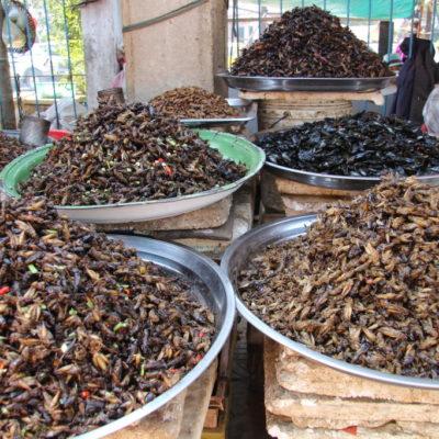 Gegrillte Insekten