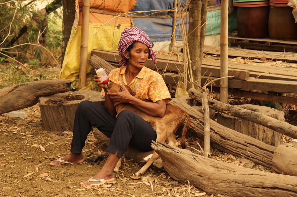 Kälbchenfütterung auf Koh Trong