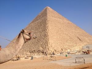 Kamel vor der Cheops-Pyramide
