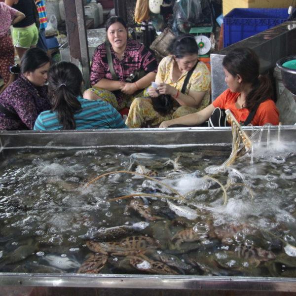 Kartenspiele hinter dem Krabbenbecken
