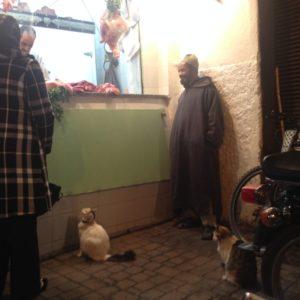 Katzen stehen beim Metzger Schlange