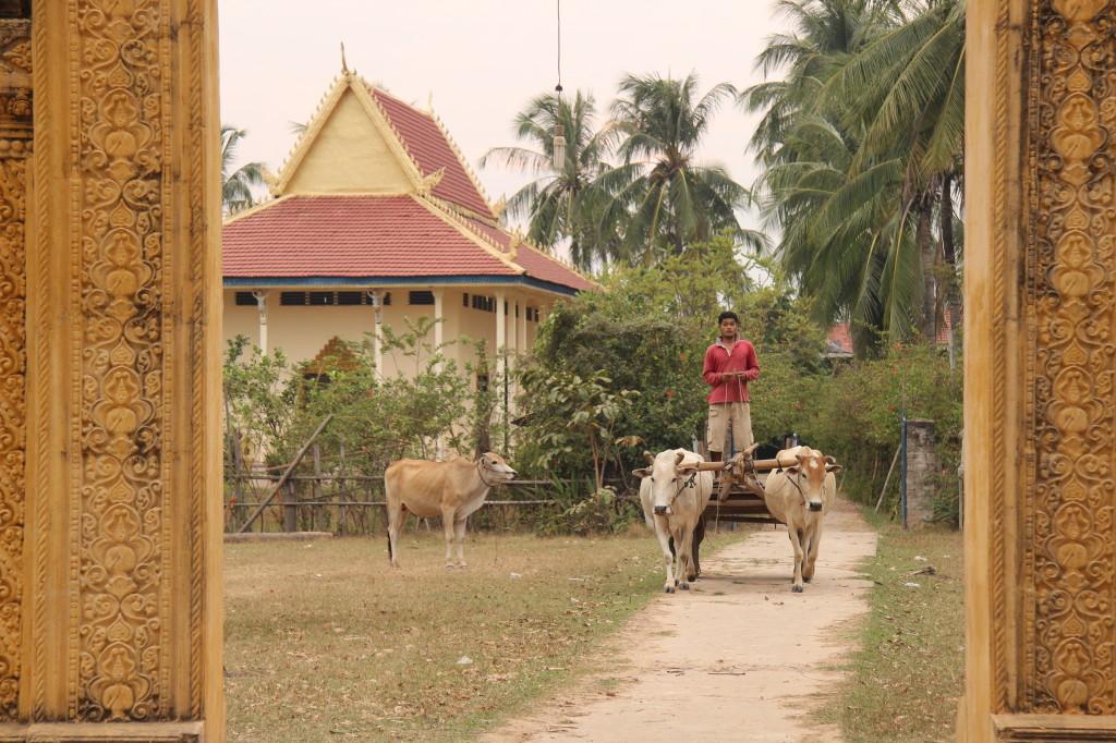 Ochsenkarren vor der Santheati Baram Pagoda