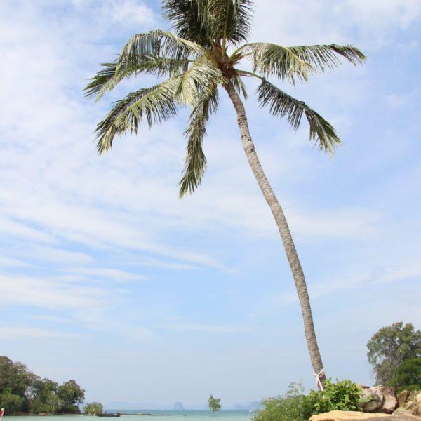 Klong Muang Beach - Strand & Palmen