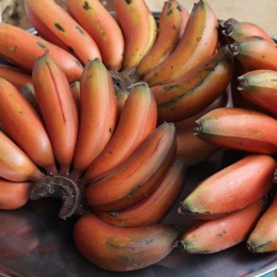 Rote Bananen in Sen Monorum / Mondulkiri