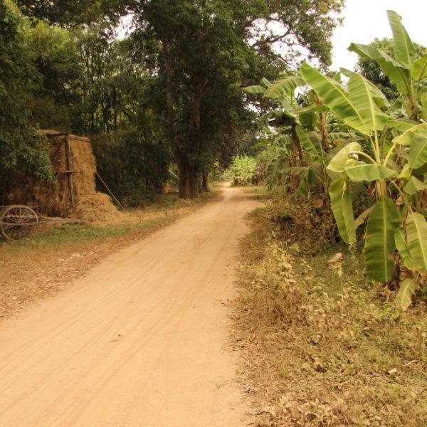 Straße auf Koh Trong - Vorbei an Bananenstauden