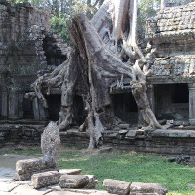 Ta Prohm – der Dschungel-Tempel