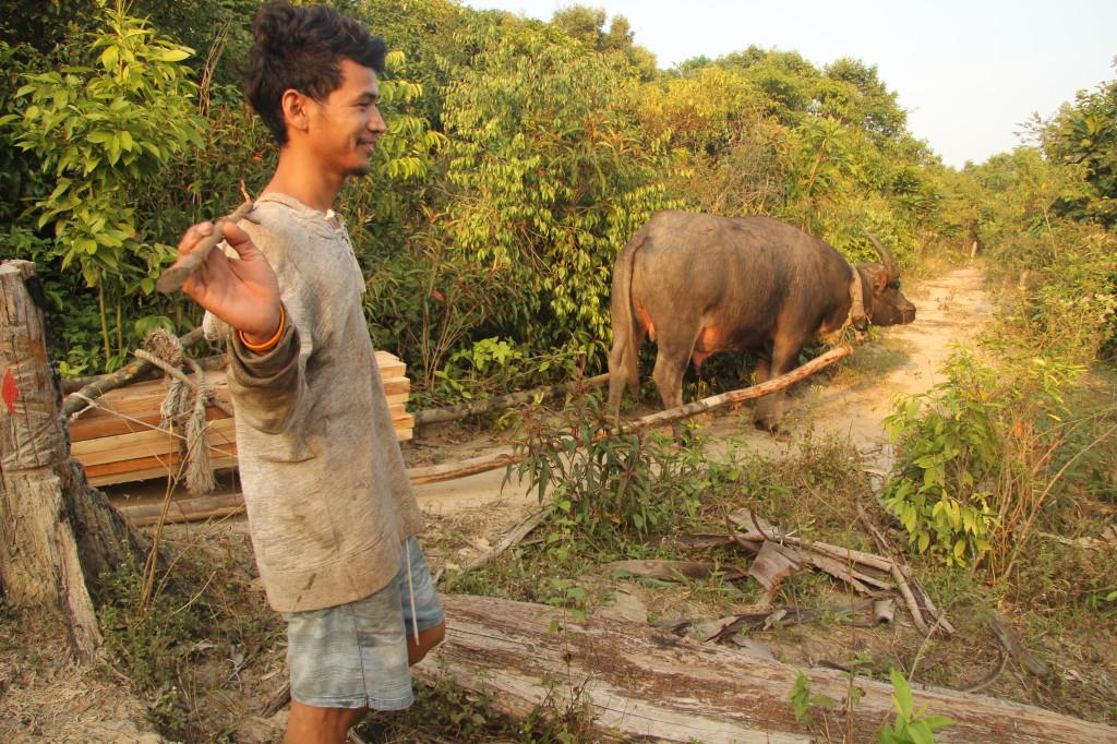 Wasserbüffel mit jungem Khmer  auf dem Weg zum Sok San Beach