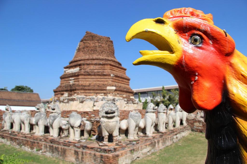 Wat Thammikarat - Vor dem von Löwenstatuen umgebene Chedi deutet ein Hahn den Weg
