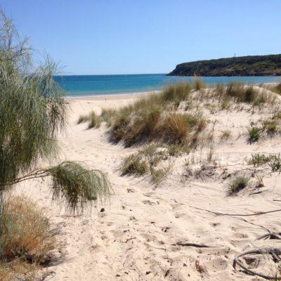 Sanddünen der Playa de Bolonia / Costa de la Luz