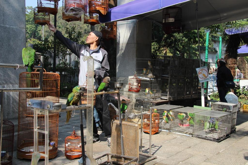 Vogelmarkt in der Yuen Po Street im Stadtteil Mong Kok - Mehr als 70 Händler verkaufen hier farbenfrohe Vögel aus allen Teilen der Welt.