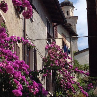 Bougainvillea in Limone Sul Garda